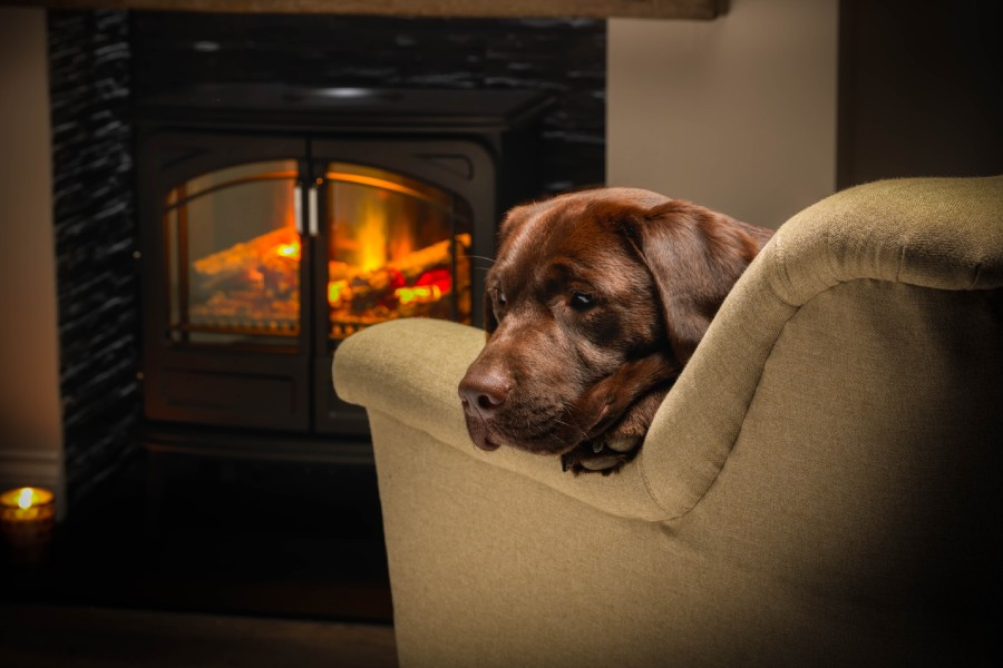 Dog sat on an armchair in front of a electric fire stove