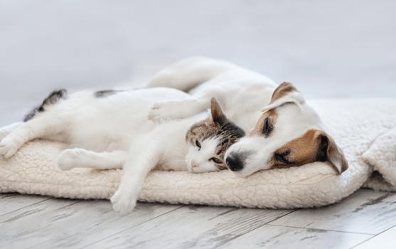 Reduce Pet Dander